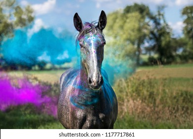 Colorful game with filly - Shutterstock ID 1177717861