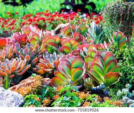 Colorful Garden Arrangement Of Waxy Desert Plants