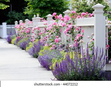 Colorful garden border, white fence and pink roses