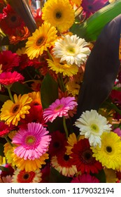 Colorful gerberas flowers composition background