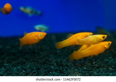 1000 Fish Name Pictures Royalty Free Images Stock Photos And