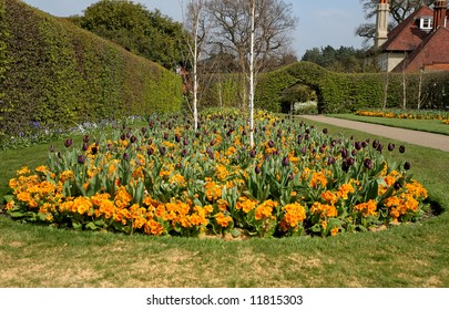 Colorful Golden Spring Flower Bed in an English garden