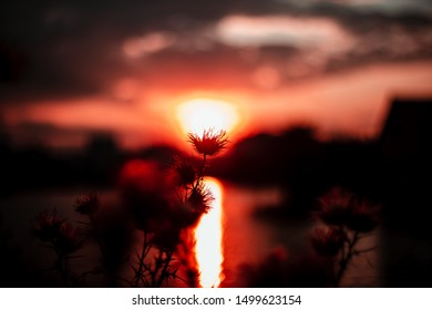 Colorful golden sunset over nature scene with vibrant,warm and rich tones. Silhouette of thistles in the golden evening sunset.