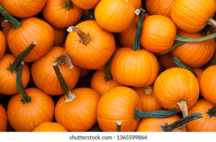 Colorful gourds and pumpkins on display for sale in supermarket.