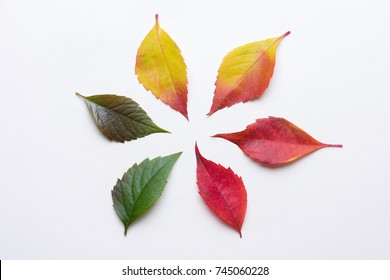 Colorful gradient autumn leafs in a circle from green to dark red