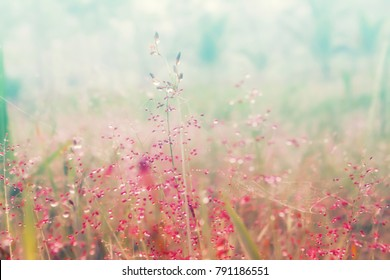 colorful grass flower with dew drops ,autumn field  fresh nature   background
