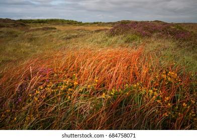 Colorful grass in Rathlin Island, Northern Ireland