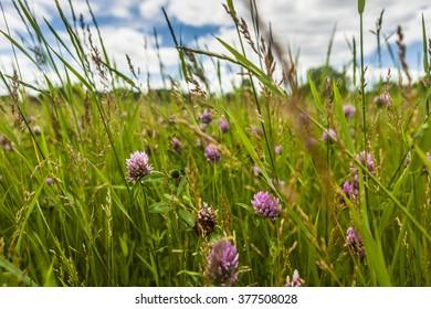 Colorful grassy scene