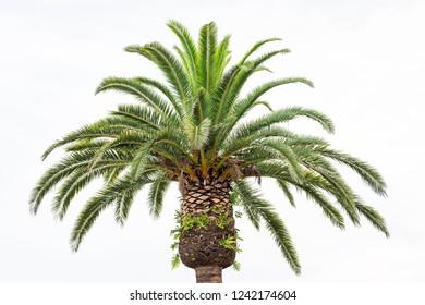 datování palm beach zahrady retron 2 připojte