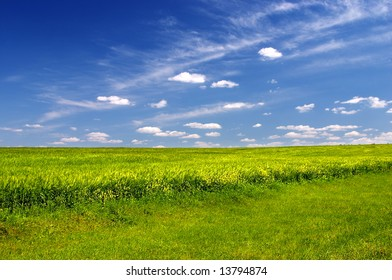 Colorful green field with cloudy blue sky
