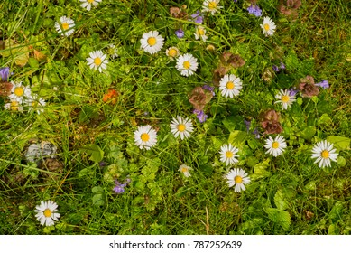 colorful green flower meadow