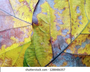 Colorful Green and Yellow Fall Leaf Texture