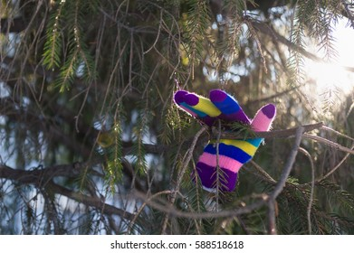 colorful greeting glove on fir tree branch