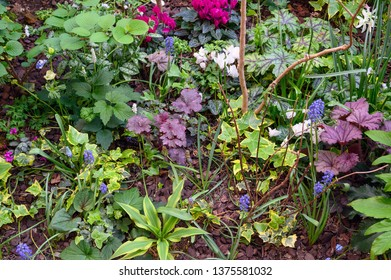 Colorful ground cover plants