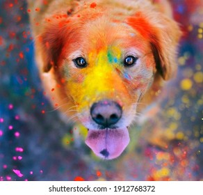 Colorful happy doggo enjoying holi