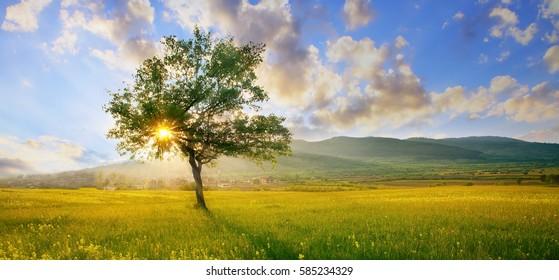 bunter HDR-Landschaftsbaum in hellgrüner und blauer Natur