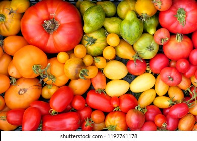 Colorful heirloom tomatoes harvest background