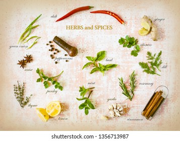 Colorful herbs and spices with tags for cooking food on old vintage background