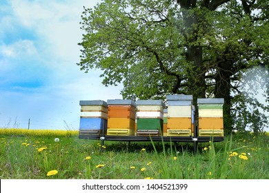 Colorful hives of bees in meadow. Wooden beehives near rape field.