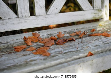 colorful holiday on an old white wooden bench in the garden