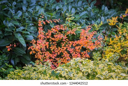 Colorful homegarden in the end of fall