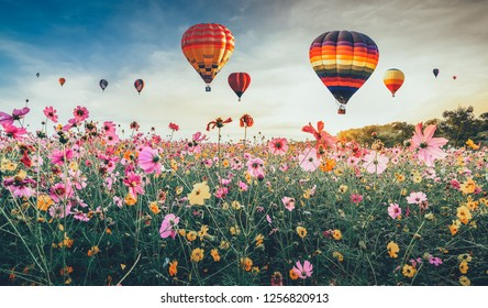 Colorful hot air balloons flying over Cosmos flower field , Vintage and retro filter effect style