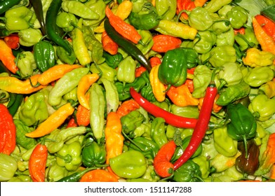 Colorful hot peppers on display at a Maine farm stand