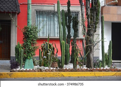 A colorful house in the Coyoacan neighborhood in Mexico City. Many cactuses are in the foreground.