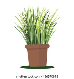 Colorful illustration plant in pot. Grass