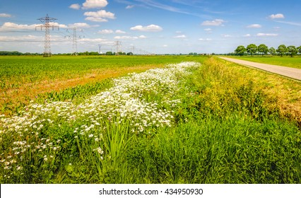 Colorful image of an agricultural area in the Netherlands with a row of pylons in the field. At the field's edge are exuberant flowering wild plants. It's a sunny day with a blue sky in summertime..