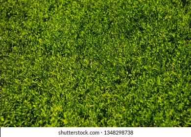 Colorful image of green grass under bright sunlight. Abstract background, film effect and author processing