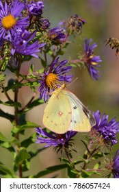 A colorful image with purple flowers, a yellow butterfly and a honey bee photobombing the image on the right side.