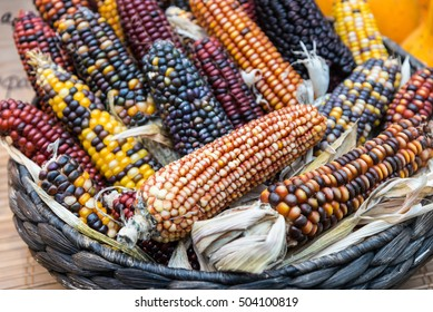 colorful Indian corn in a basket