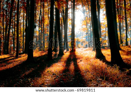 colorful indian summer forest