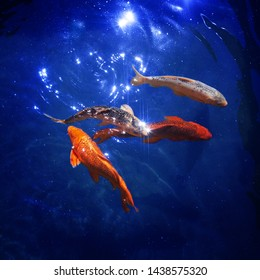 Colorful japanese koi carps swim in pond close up, goldfishes dive in blue shining water, beautiful tropical golden fishes in sea under night moonlight, sparkling stars, magical fantastiс illustration