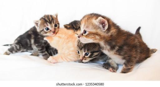 colorful kitten litter