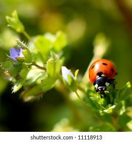 Colorful ladybug crawling on a plant