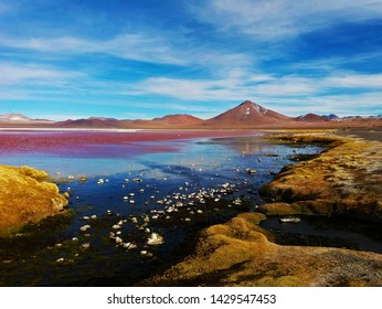 Colorful Laguna colorada in Bolivia, a bay with red algae and a mountain in the background