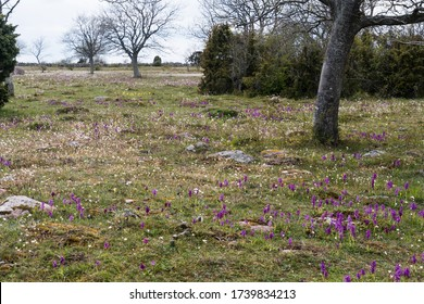 Colorful landscape with blossom flowers in white and purple colors