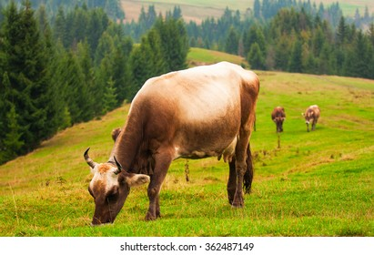 Colorful landscape with brown cow on green hill