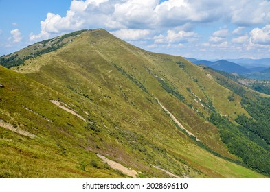 Colorful landscape of the mountain slope with multicolored grass overlooking the beautiful Carpathian mountains, Ukraine