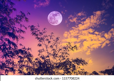 Colorful landscape of sky with bright full moon over bamboo trees in the evening, serenity nature background. The moon taken with my camera.