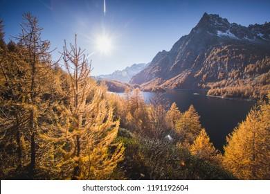 Colorful larch near Lake Devero, in autumn, Alpe Veglia and Alpe Devero Natural Park, Baceno, Verbano Cusio Ossola province, Piedmont, Italy