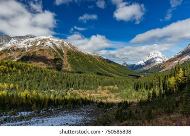 Colorful larches landscape in the Canadian Rockies
