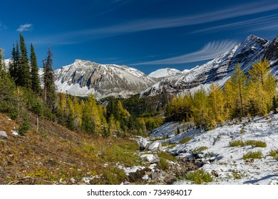 Colorful larches landscape at Highwood Pass, hiking Pocaterra Mountain