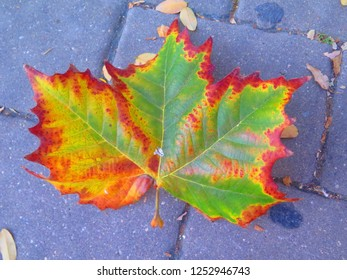Colorful leaf on pavement in December sunshine in Andalusian village