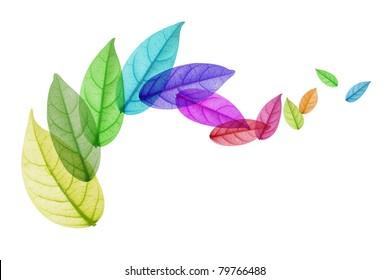 Colorful leaf Rotation