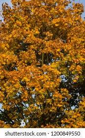 Colorful leafs on trees in october - ending summer, middle autumn season. Warm Yellow, red and orange colors.