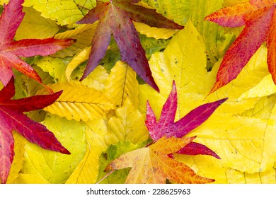 A lot of colorful Leaves in the autumn.