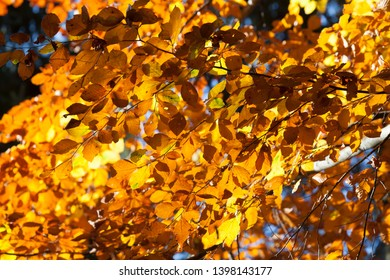 Colorful leaves in the autumn for a background
